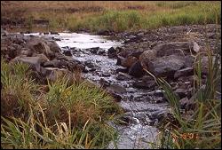 Skull Creek